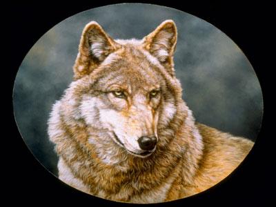 image_Wolf1_20081125.jpg