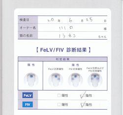 FIV.jpg